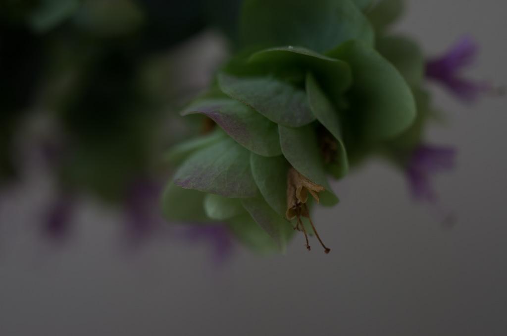 oregano kent beauty